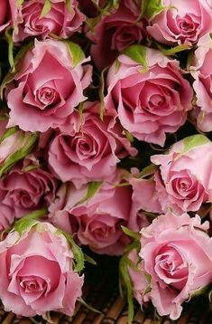 [House Of Flowers] floral arrangements, Bouquets 💐 Love Rose, My Flower, Pretty Flowers, Pink Flowers, Bloom, Coming Up Roses, Arte Floral, Beautiful Roses, Romantic Roses