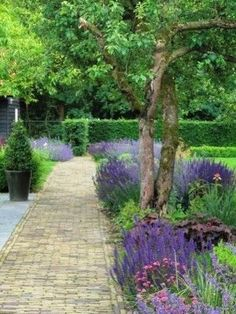 Discover recipes, home ideas, style inspiration and other ideas to try. Small Yard Design, Garden Cottage, Home And Garden, Diy Fence, Fence Ideas, Garden Fencing, Trees To Plant, Garden Inspiration, Botanical Gardens