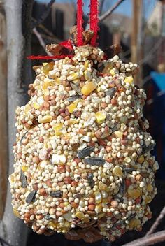 Pinecone bird feeder. Me & Kenzie do these with peanut butter. The birds love em.