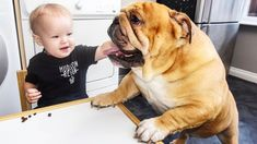 French Bulldog Loves Baby - Sweetest Friendship of Funny Dog and Baby Co... #dogsfunnybaby