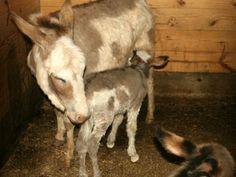Neeerd.com - Animales con sus crias