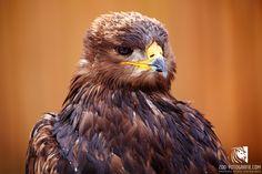 Adler Tierpark Altenfelden Park, Animals, Eagle, Good Photos, Image Editing, Animales, Animaux, Parks, Animal