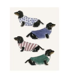 doxies in sweaters
