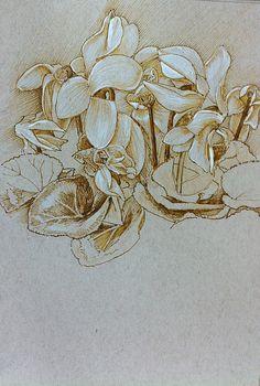 Cyclamen flowers Pen and nk