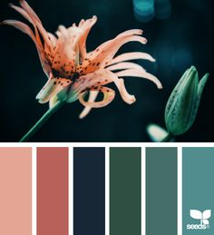 { flora hues } | image via: @e.oldebenneker #color #colour #colorpalettes #colorscheme