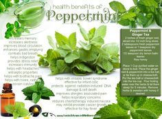 Health+Benefits+of+Peppermint