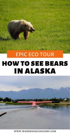 Have you ever wanted to safely see bears in the wild? Then check out this amazing eco tour in Alaska that will take you to incredible places in Alaska and see incredible things! I things to do in Alaska I where to go in Alaska I places to go in Alaska I Alaska tours I tours in Alaska I eco tours in Alaska I Alaska travel I wildlife viewing in Alaska I Alaska wildlife I USA travel I what to do in Alaska I travel in Alaska I #Alaska