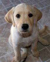 Common #Dog #Health Issues. #Nylabone http://www.nylabone.com/dog-101/health-nutrition/common-health-issues/#