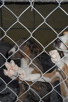Animal Shelter Asks For Help After Its Dogs Are Apparently Forced To Fight