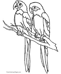 Two Parrots Color Page Animal Coloring Pages For Kids Thousands Of Free Printable