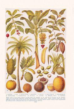 tropical botanical vintage - Buscar con Google