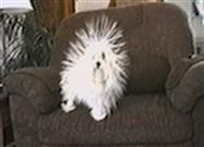 Perro Estático