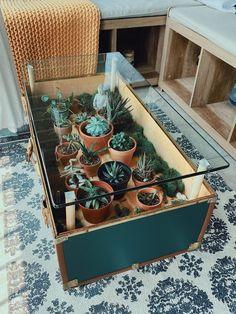 House Plants Decor, Plant Decor, Suculentas Diy, Diy Casa, Deco Originale, Ideias Diy, Aesthetic Rooms, My Dream Home, Home And Living