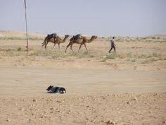 Kameel rijden, Hammamet