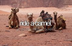 Ride a Camel... maybe in Egypt or Morocco | Best places to ride a camel: 1. Damaraland, Namibia 2. The Silk Road, China 3. Thar desert, Jaisalmer, India 4.The Gobi desert, Mongolia 5. Ksar Ghilane, Sahara desert, Tunisia 6. Timanfaya National Park, Lanzarote 7. Australia (there are several excellent tours all throughout the country) 8. Ngorongoro Crater, Kenya 9. Desert of the Sinai, Eqypt 10. Sahara desert, Morocco