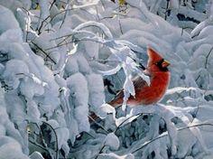 Winter with Cardinal - snow, tree, cold, cardinal, winter. Love Birds, Beautiful Birds, Cardinal Pictures, State Birds, Cardinal Birds, Bird Wallpaper, Winter Beauty, Backyard Birds, Wildlife Art