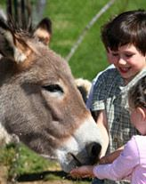 A Unique Family Experience Farm Stay, Sydney, Holidays, Park, Unique, Kids, Animals, Vacations, Children