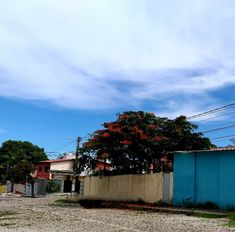 Rua Tarcísio Galvão,  Nova Descoberta Delonix Regia, Street