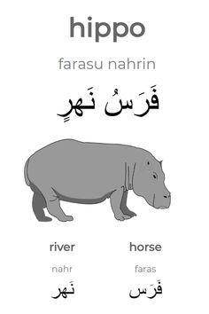 """Learning Arabic MSA (Fabienne) The Arabic word for """"hippo"""" is an idafa construction of the word for """"horse"""" and the word for """"river"""". Literally it means """"horse of river"""". Persian Language, Arabic Language, Learn Arabic Alphabet, Arabic Phrases, Arabic Lessons, English Writing Skills, Learn English Words, Beautiful Arabic Words, English Language Learning"""