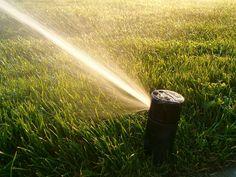Want a Killer Lawn Next Spring? Fall Lawn Tricks!