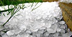 Ľadovec v záhrade