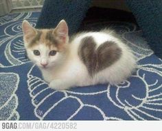 Heart kitty!