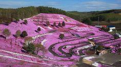 Nikmati Pemandangan Gunung Pink Menakjubkan di Hokkaido