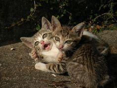 The 11 Cat Islands of Japan 【Photos】