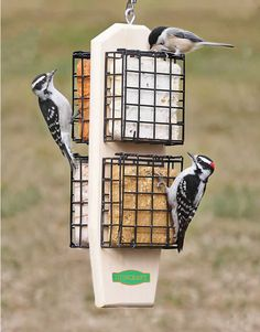 the Super Clinger Suet Feeder at . Satisfaction Guaranteed at your Wild Bird Superstore.Buy the Super Clinger Suet Feeder at . Satisfaction Guaranteed at your Wild Bird Superstore. Bird House Feeder, Diy Bird Feeder, Best Bird Feeders, Small Birds, Pet Birds, Birds 2, Angry Birds, Loro Animal, Woodpecker Feeder
