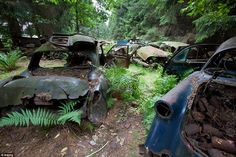 These rusted classic cars from the Sixties were dumped in a forest scrapyard in Chatillon,...