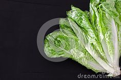 Chinese cabbage on vintage table