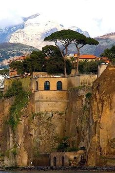 Sorrento, Italy. They call these trees Umbrella Pines - the Italian countryside is full of these interesting trees. travel & #save 50% on airfare with #AirConcierge.com