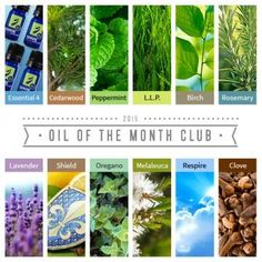 Did you love the 2015 Oil of the Month Club collection? If you want to buy the entire Year's worth of Oils, YOU CAN!  You can buy it this week for $185.99 and then use a coupon code MHIGHLANDER for 10% off which makes it only $167.40!!! That is an INCREDIBLE deal.