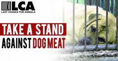 Take a Stand Against Dog Meat!