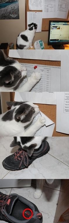 proof your cat is out to get you - I could see Trixie doing this!!!
