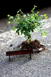 Guerilla Gardening: A miniature creation by Steve Wheen, the Pothole Gardener.