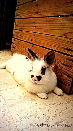 Best pet rabbit ever. Love Waffle. <3