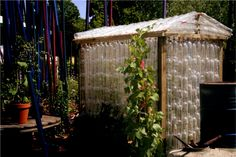 plastic soda bottles make a great green house