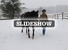 A profile of a top Arabian horse breeder in Berks County: