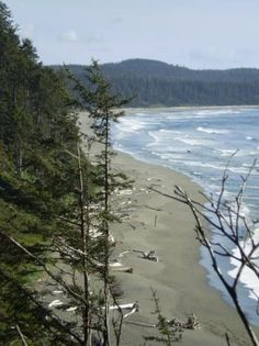 Shi-Shi Beach at Makah Indian Reservation.  One of three in the Olympic coast.  Forks,  WASHINGTON STATE