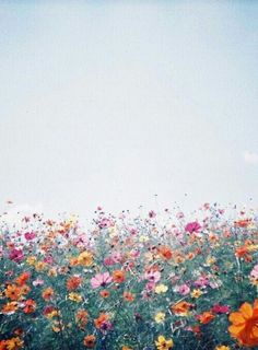 landscape flowers all Wild Flowers, Beautiful Flowers, Field Of Flowers, Meadow Flowers, Happy Flowers, Pretty Pictures, Mother Nature, Planting Flowers, Scenery