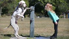 Ecco come (e perché) il cervello dei cani reagisce alla voce del … – Caffeina Magazine - http://www.forumcani.com/blog/2014/11/27/ecco-come-e-perche-il-cervello-dei-cani-reagisce-alla-voce-del-caffeina-magazine/