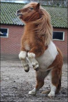 Love this guy! One of my dreams is to start a mini horse rescue.