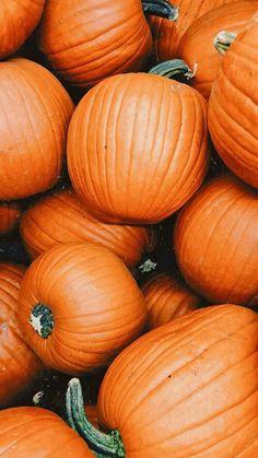 Sweater Pumpkins, Autumn Aesthetic, Fall Wallpaper, Iphone Backgrounds, Iphone Wallpapers, Art Inspo, Eve, Crisp, Halloween Costumes