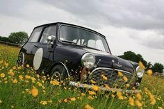 Mk1 I in the flowers