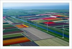 Some Awesome Shots Of Tulip Field Of Netherlands