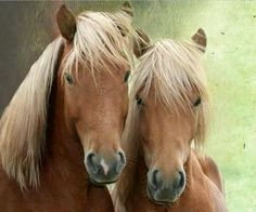 Sweet horses face to face ★♥★♥★