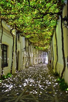 20 of the most beautiful streets in the world Jerez de la Frontera: Andalusia, Spain.
