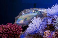 Go Back > Gallery For Underwater Ocean Scenes