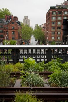 10 Garden Ideas to Steal from the High Line in New York City - Gardenista New York High Line, Highline Nyc, Flower Market, Garden Inspiration, Garden Ideas, Bright Green, Container Gardening, Townhouse, New York City